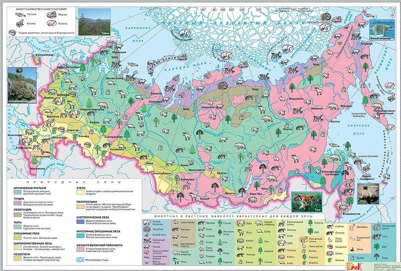 Природные зоны Арктики